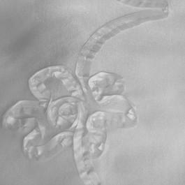 Stoff Allover Bändchen Spitze auf Platin Taft in weiß/weiß
